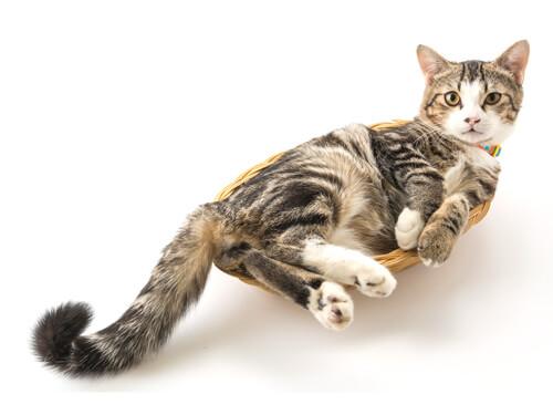 Laadukas kissanhiekka