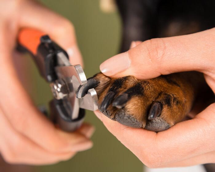 Koiran kynsien leikkaus