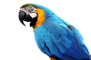 papukaija - eläinkauppa Kuusankoski