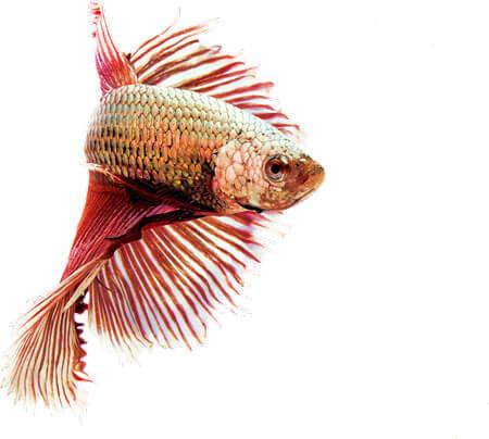 Kalat ja muut akvaarion asukkaat