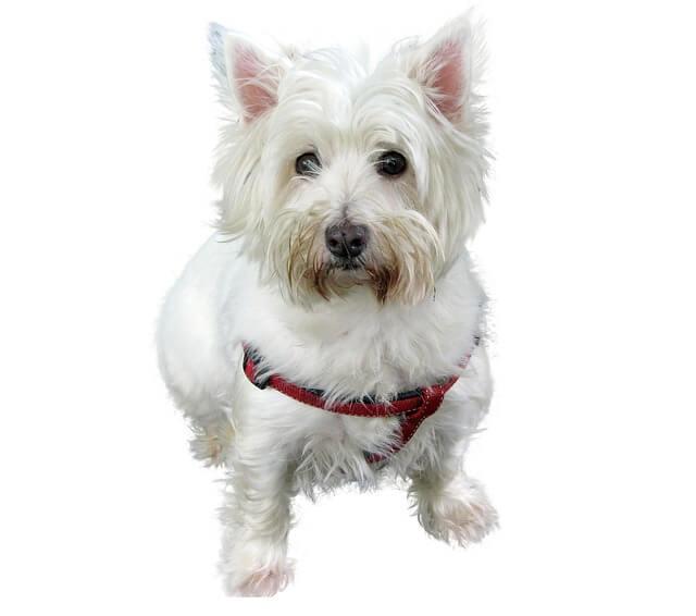 Koiran talutushihnat