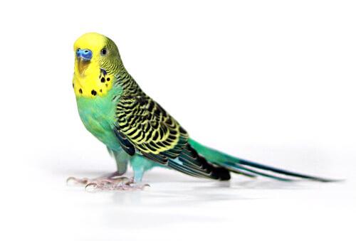 Linnuille 1